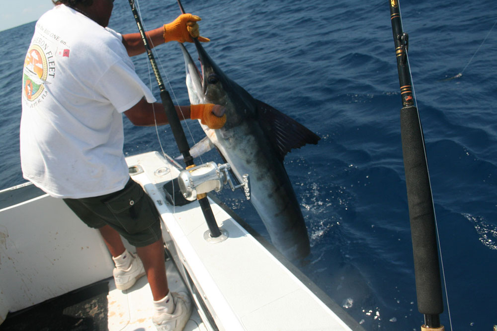 A strut down Marlin Boulevard could lead to catches like a striped marlin. Photo by Kate Crandell.