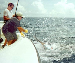 Captain Ken Harris wires a marlin, caught by his son Clay Friday, that proved to be the winning fish at the 2001 Drambuie Key West Marlin Tournament. The fish was released and Harris' boat won $20,000 for first place in the marlin division. Photo by Bob Niemi.
