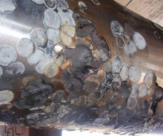 prop shaft crevice corrosion