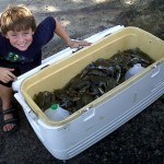 Crabbing 101: Trot Line, Pull Traps, and Chicken Necking