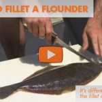 How To Fillet a Flounder: Instructional Video