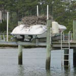 Wildlife Gone Wild: Protect Your Boat from Five Invaders