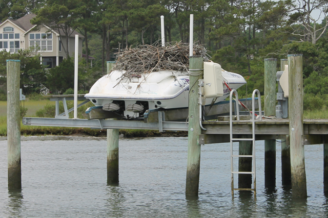 Wildlife gone wild protect your boat from five invaders boats osprey sciox Gallery