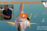 Got Bait? Mahi Madness above, fish cam attacked underwater