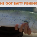 Take the Got Bait? Fishing Quiz
