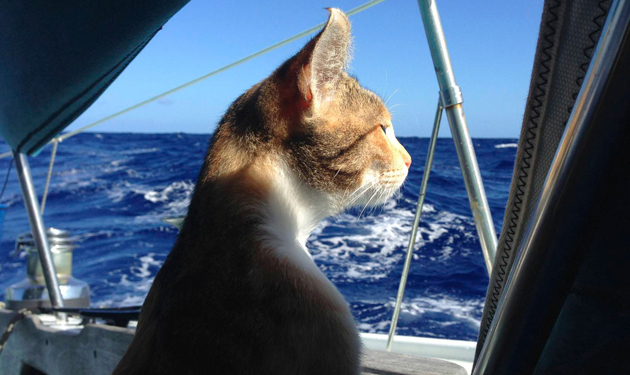 Amelia the cat keeps watch for her captain and shipmate, Liz Clark. Photo: Liz Clark