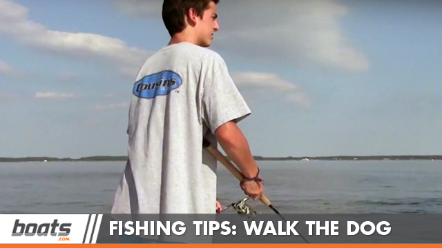 how to walk the dog topwater fishing