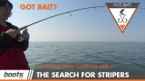 Got Bait? The Search for Stripers